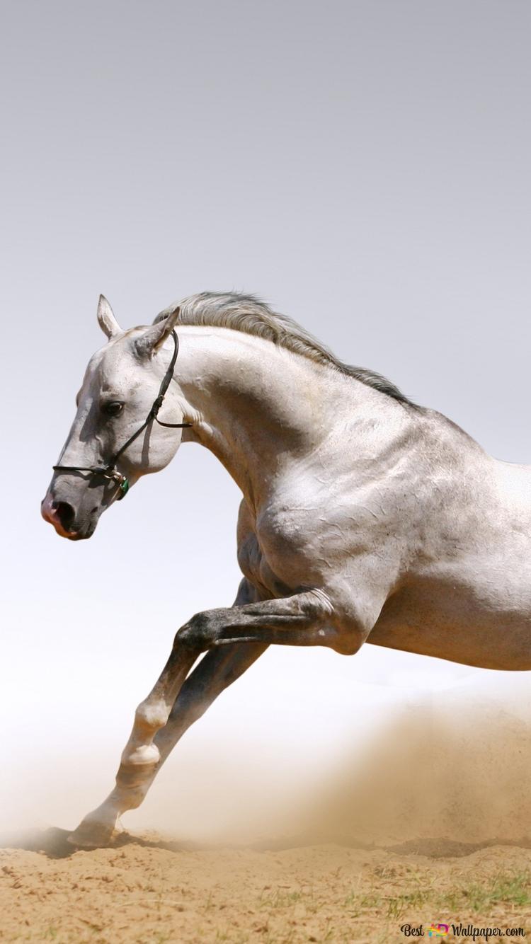 Running Horse Hd Wallpaper Download