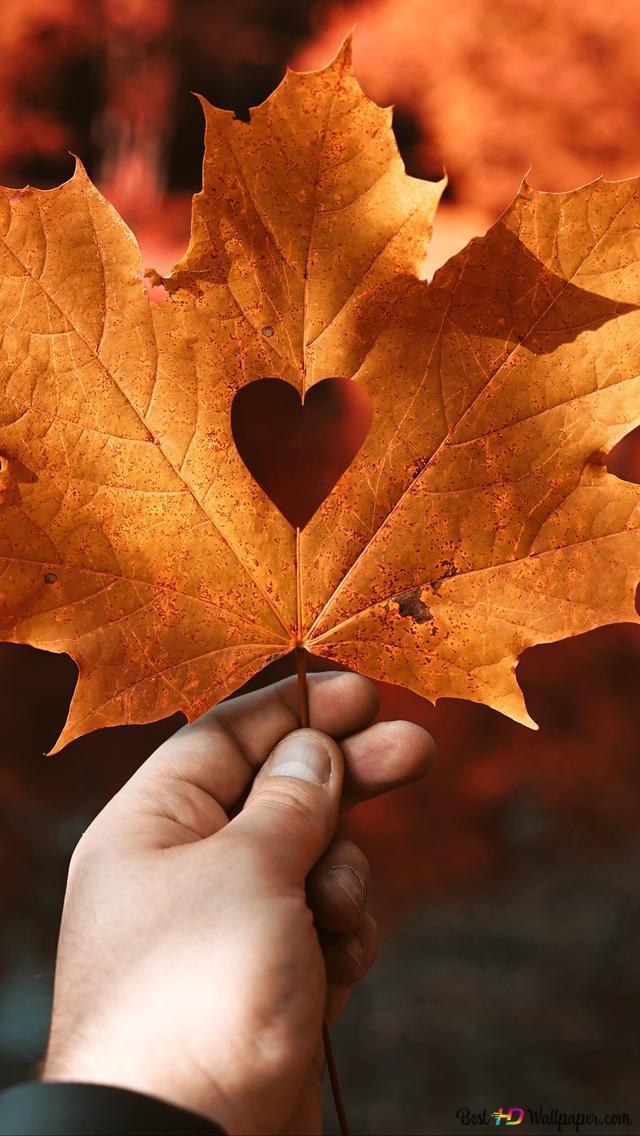foto de Saint Valentin - coeur gravé sur la feuille d'érable HD fond d ...