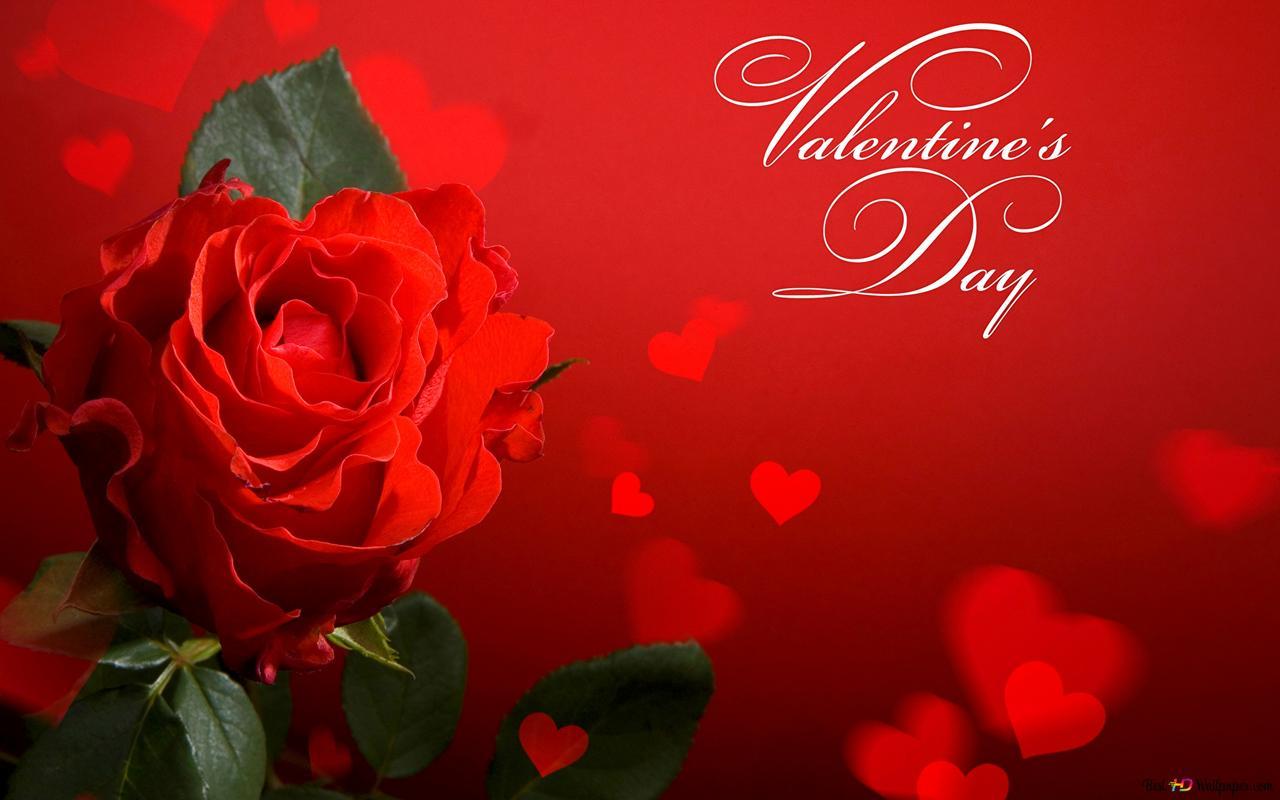 Saint Valentin Rose Rouge Et Coeur Bokeh Hd Fond D Ecran