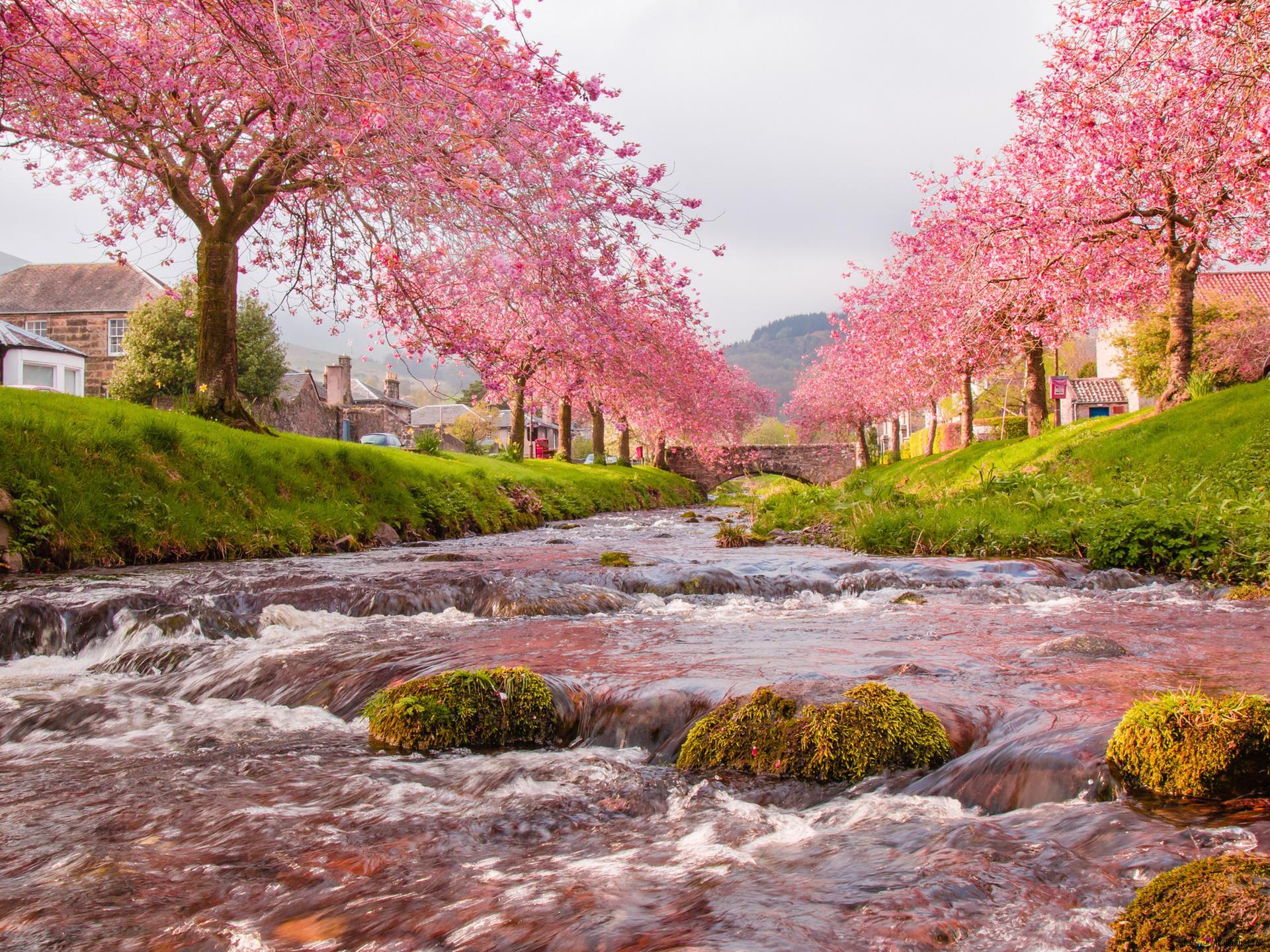 картинки на телефон природа весна река ушел армию, когда