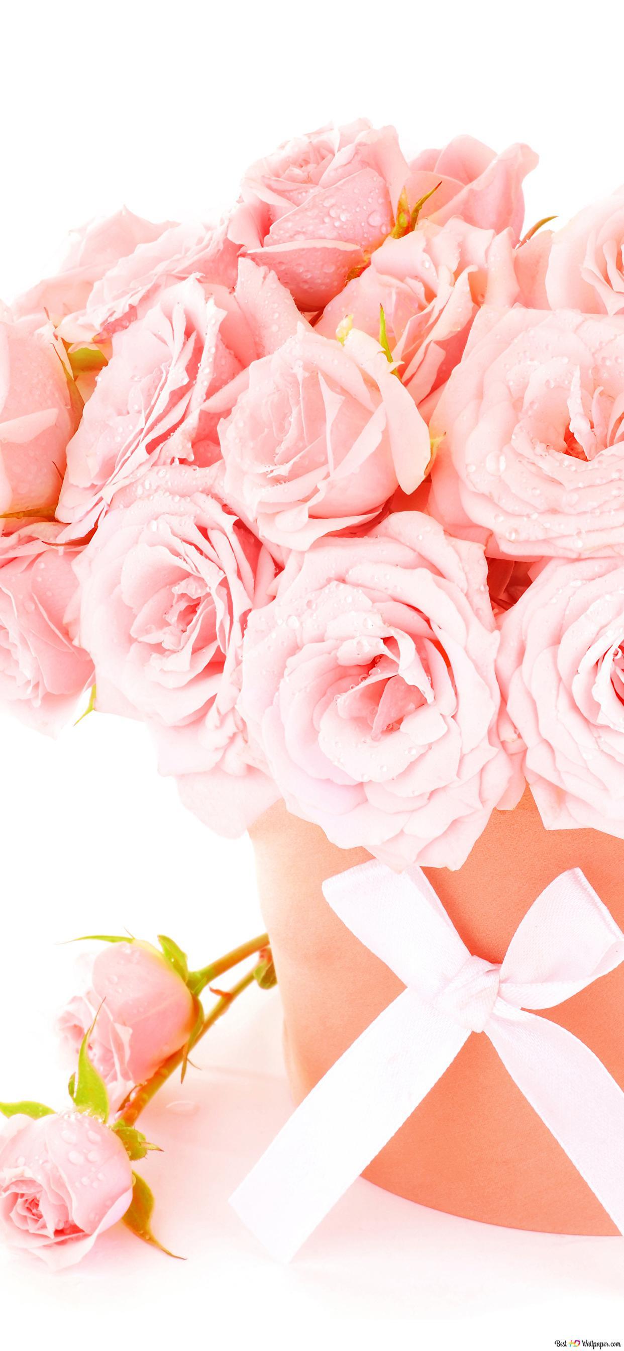 San Valentino Morbido Rose Rosa Decorazione Download Di Sfondi Hd
