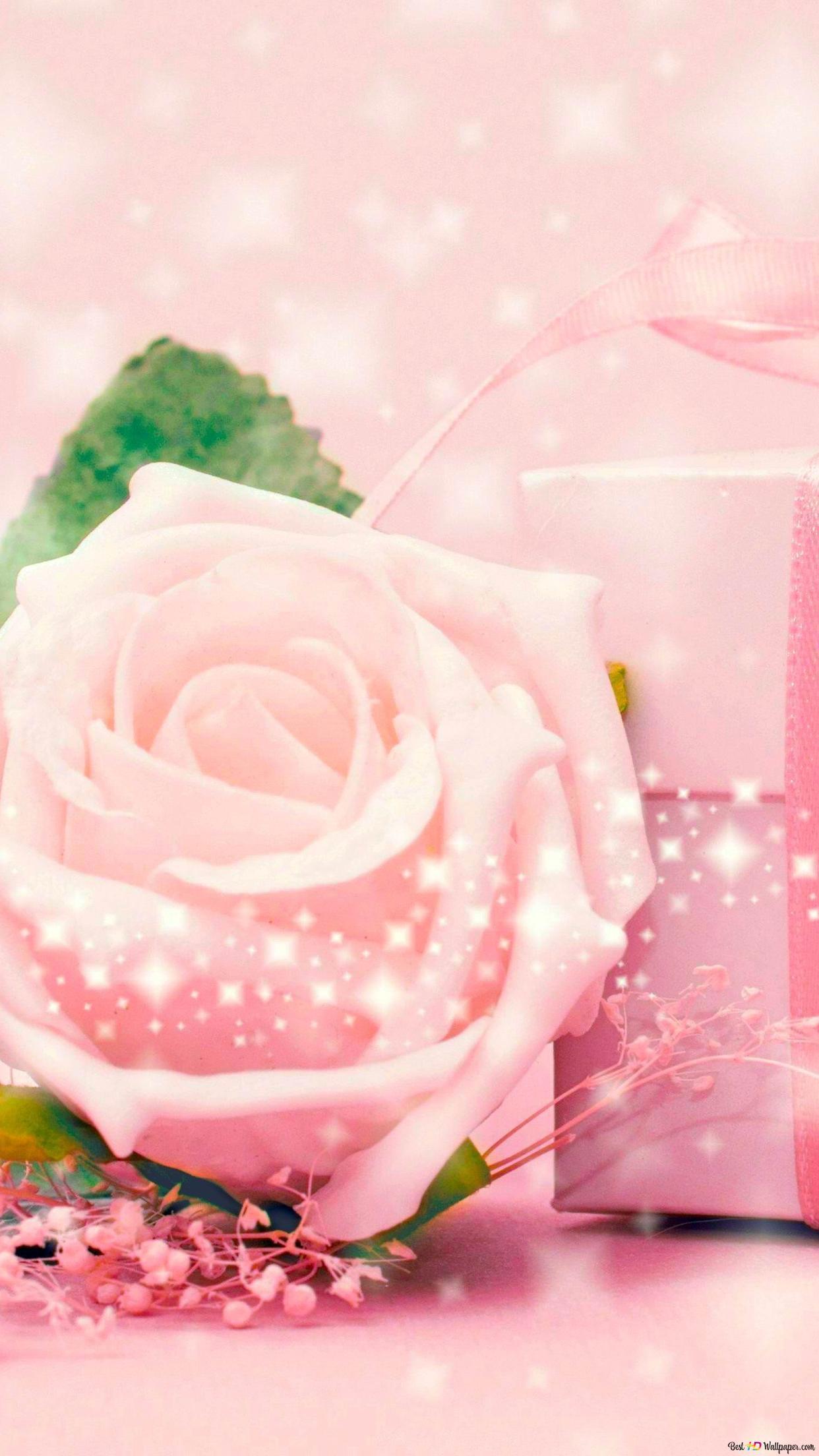 San Valentino Rose Rosa E Regalo Download Di Sfondi Hd