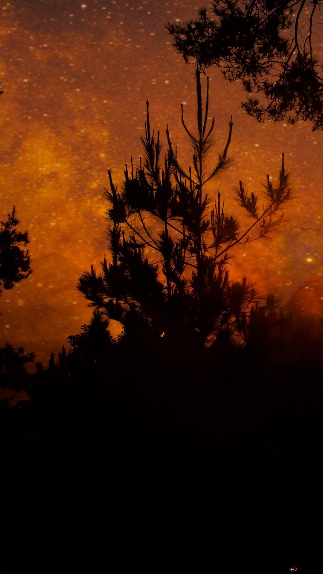 森のシルエット Hd壁紙のダウンロード
