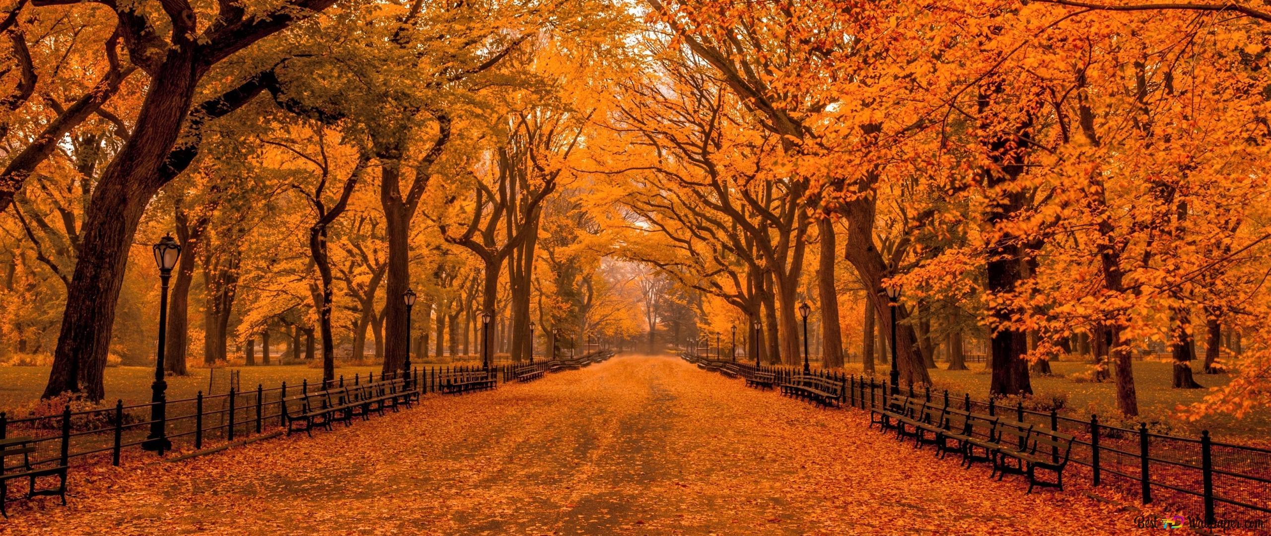 セントラルパークで秋 Hd壁紙のダウンロード