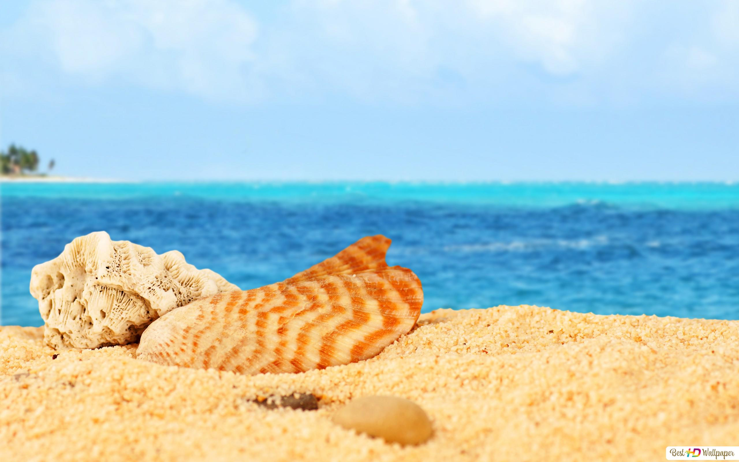 Shells In The Beach Hd Wallpaper Download