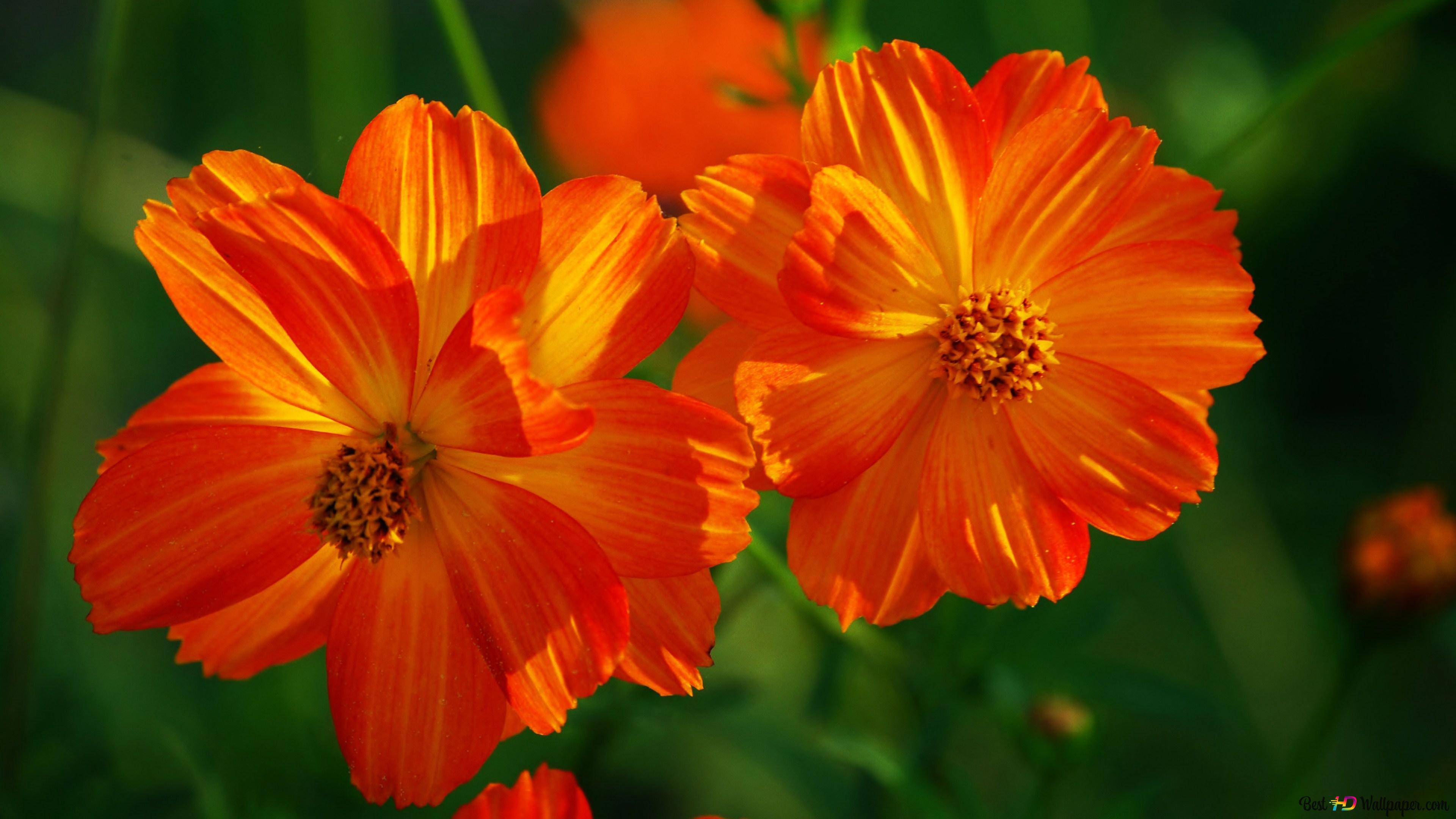 Small pretty flowers HD wallpaper download