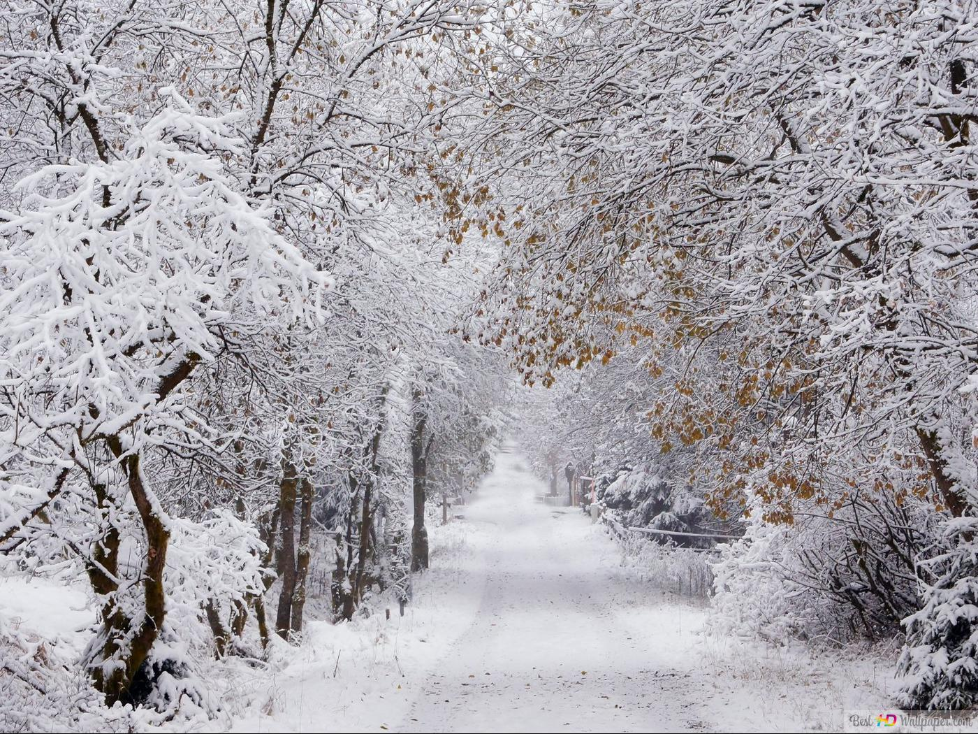 Snowy Road In Winter Hd Wallpaper Download