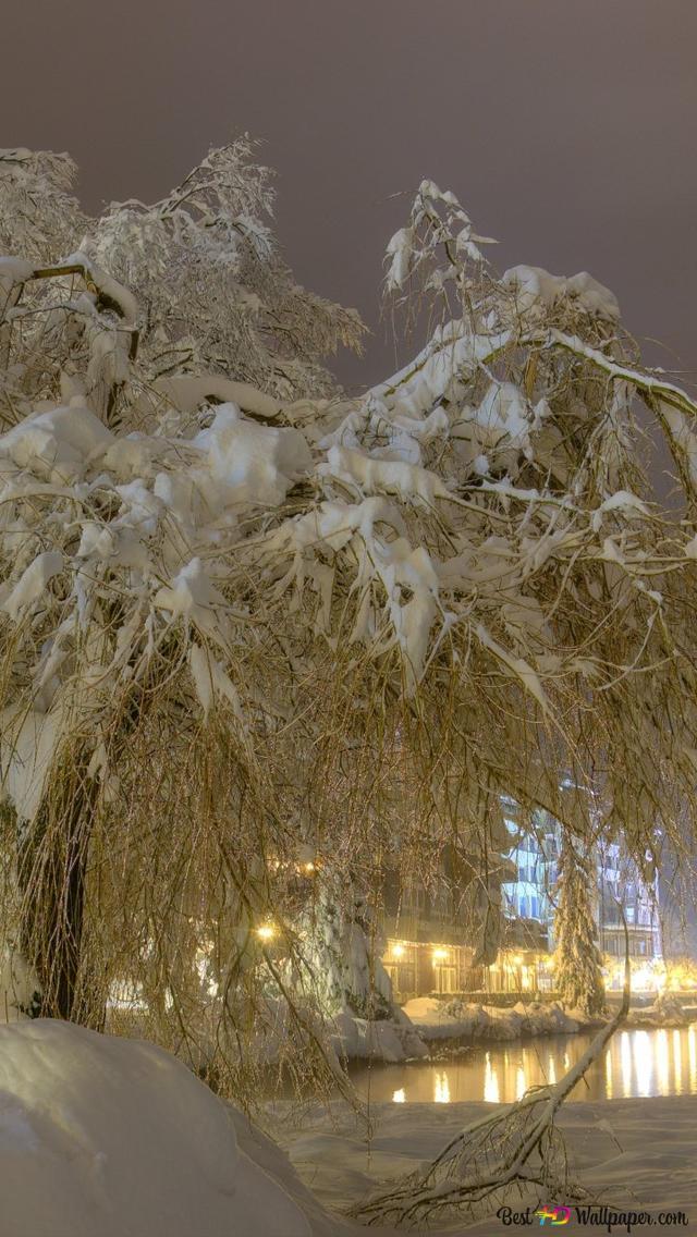 Snowy Tree On Winter Night Hd Wallpaper Download