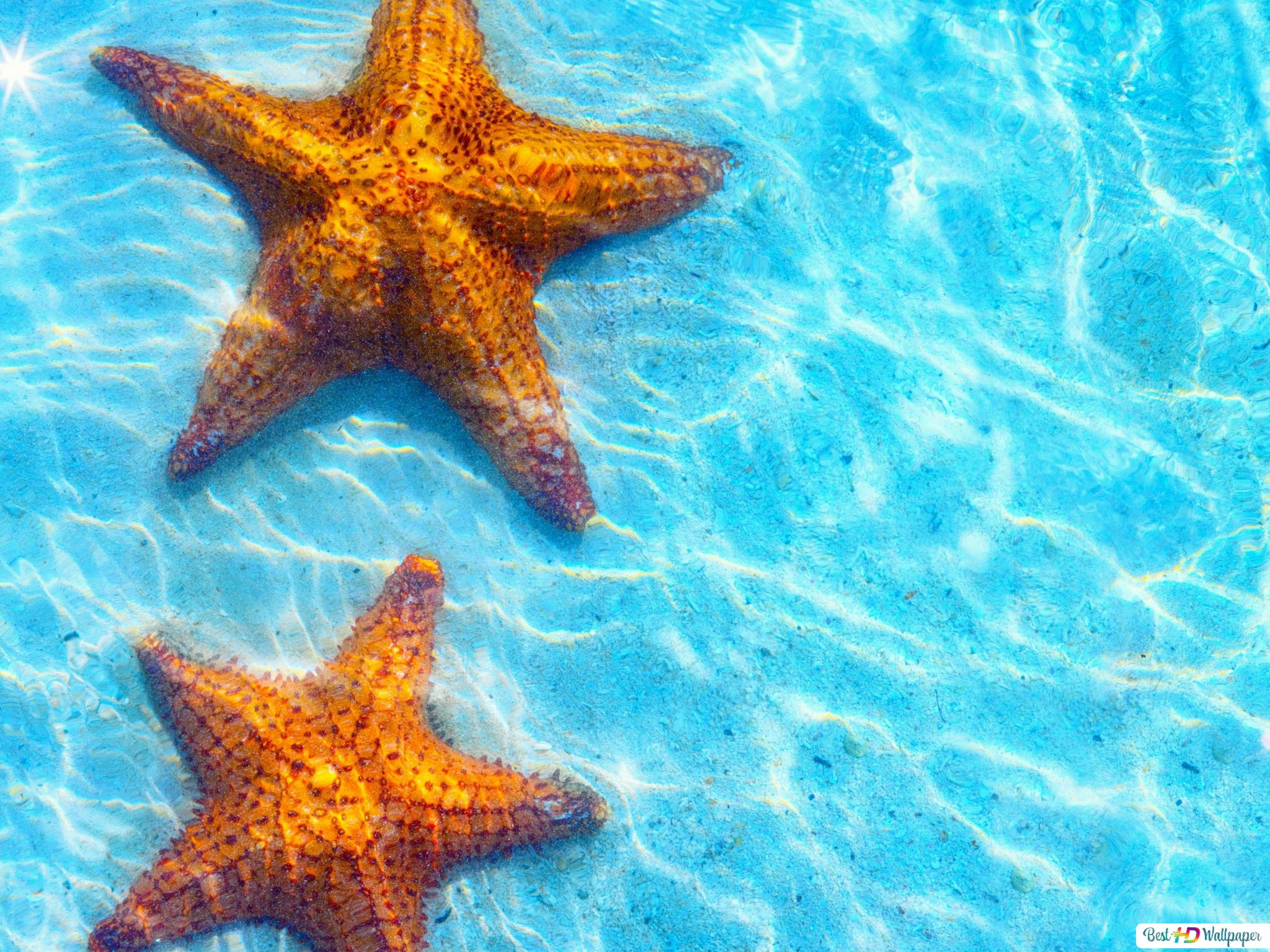 Star Fish In The Water Hd Wallpaper Download