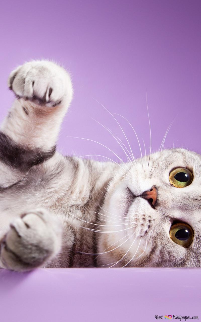 Staring Kitty Hd Wallpaper Download