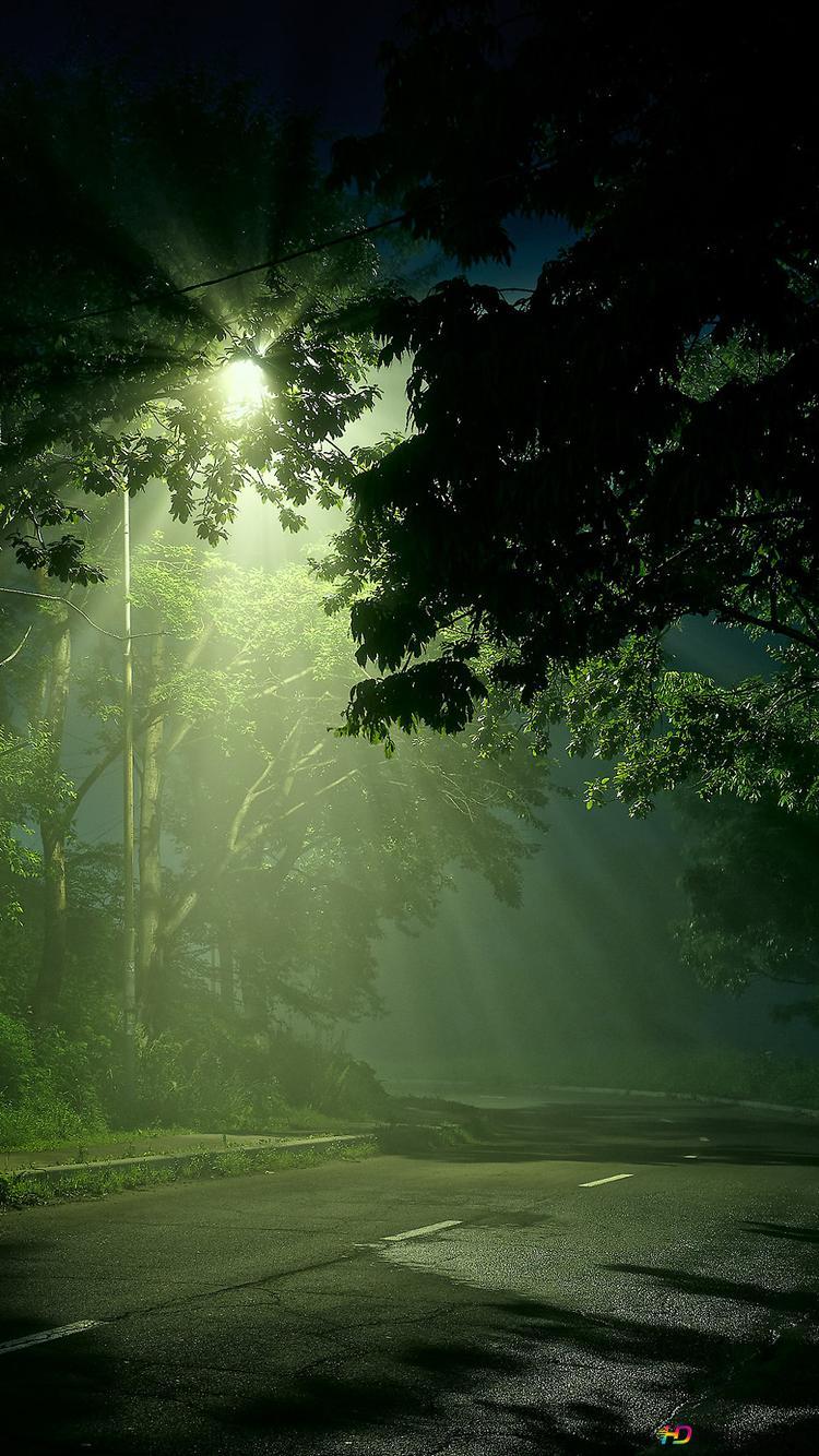 Strasse Im Wald Hd Hintergrundbilder Herunterladen