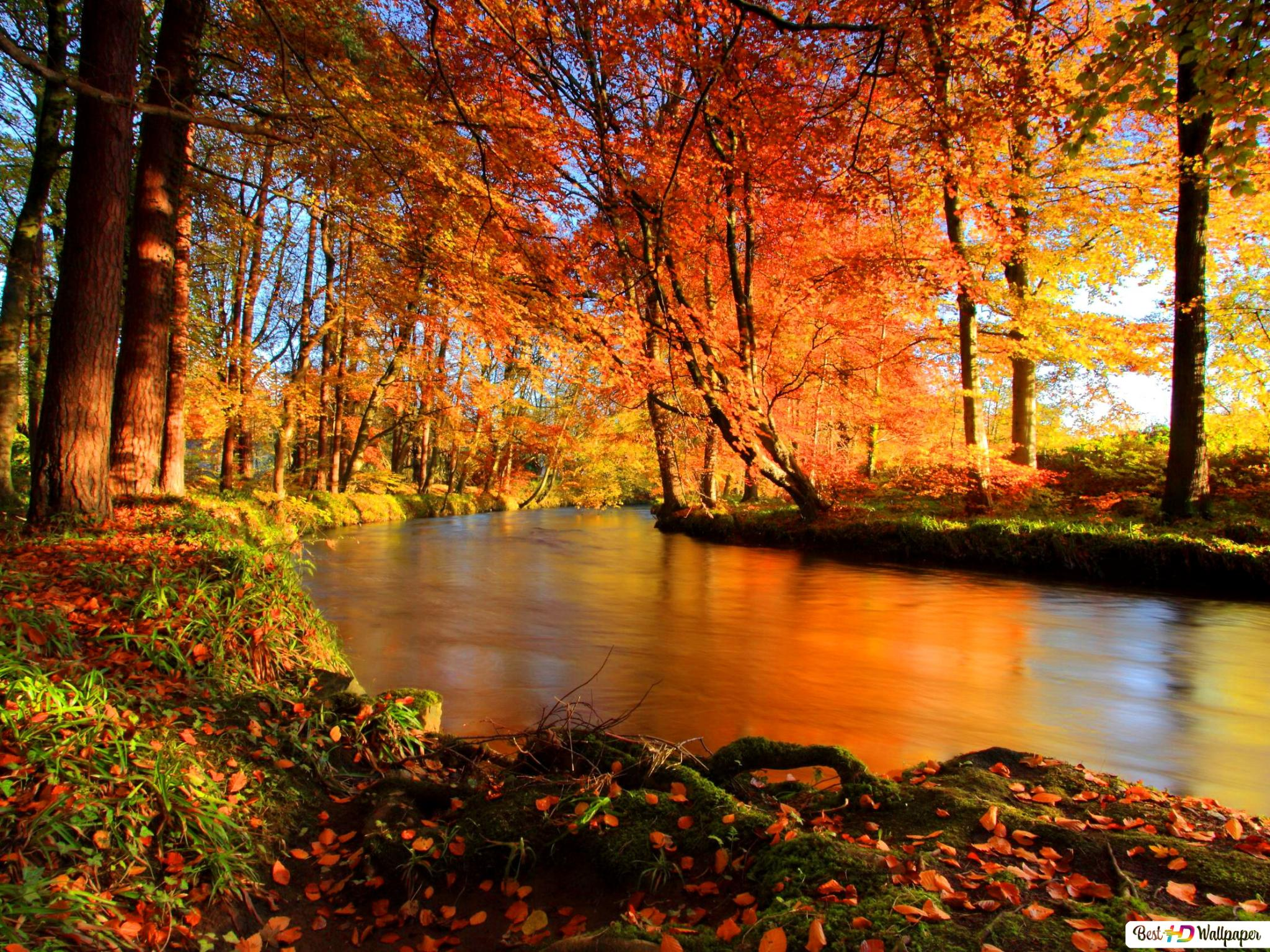 The River Flows In The Autumn Forest Hd Wallpaper Download