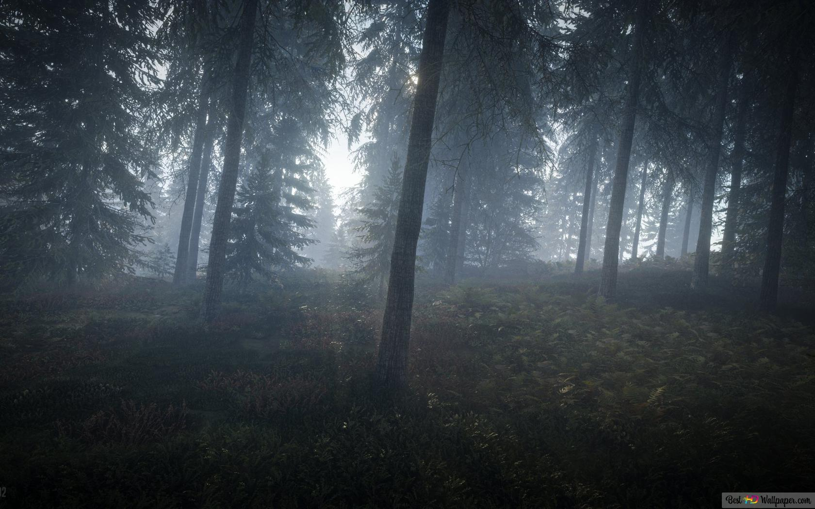 Thehunter Call Of The Wild Misty Forest Hd Wallpaper Download