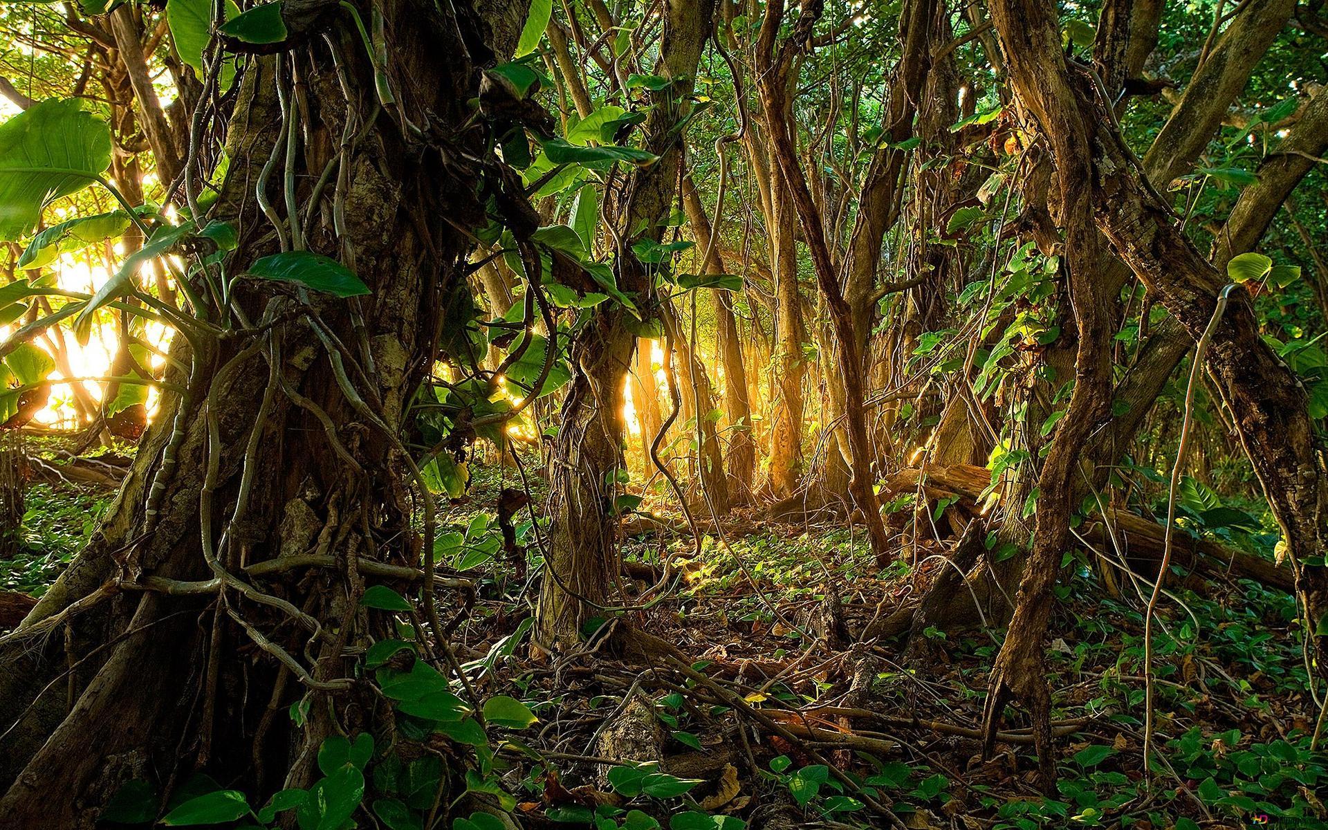 Tropisch Regenwoud Hd Wallpaper Downloaden