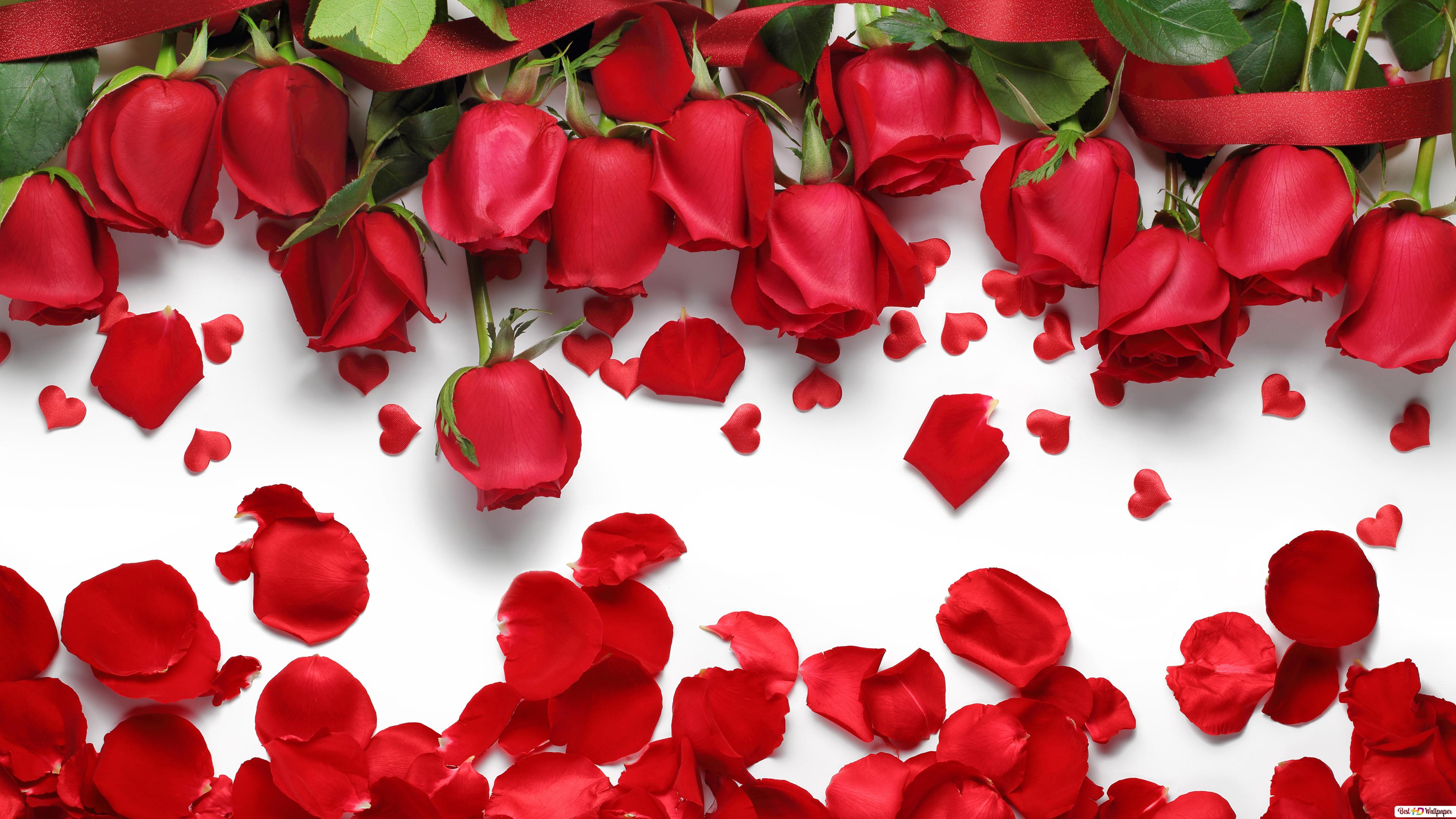 Fiori Belli.Tutti I Fiori Sono Belli Ma Le Rose Sono Separati Download Di