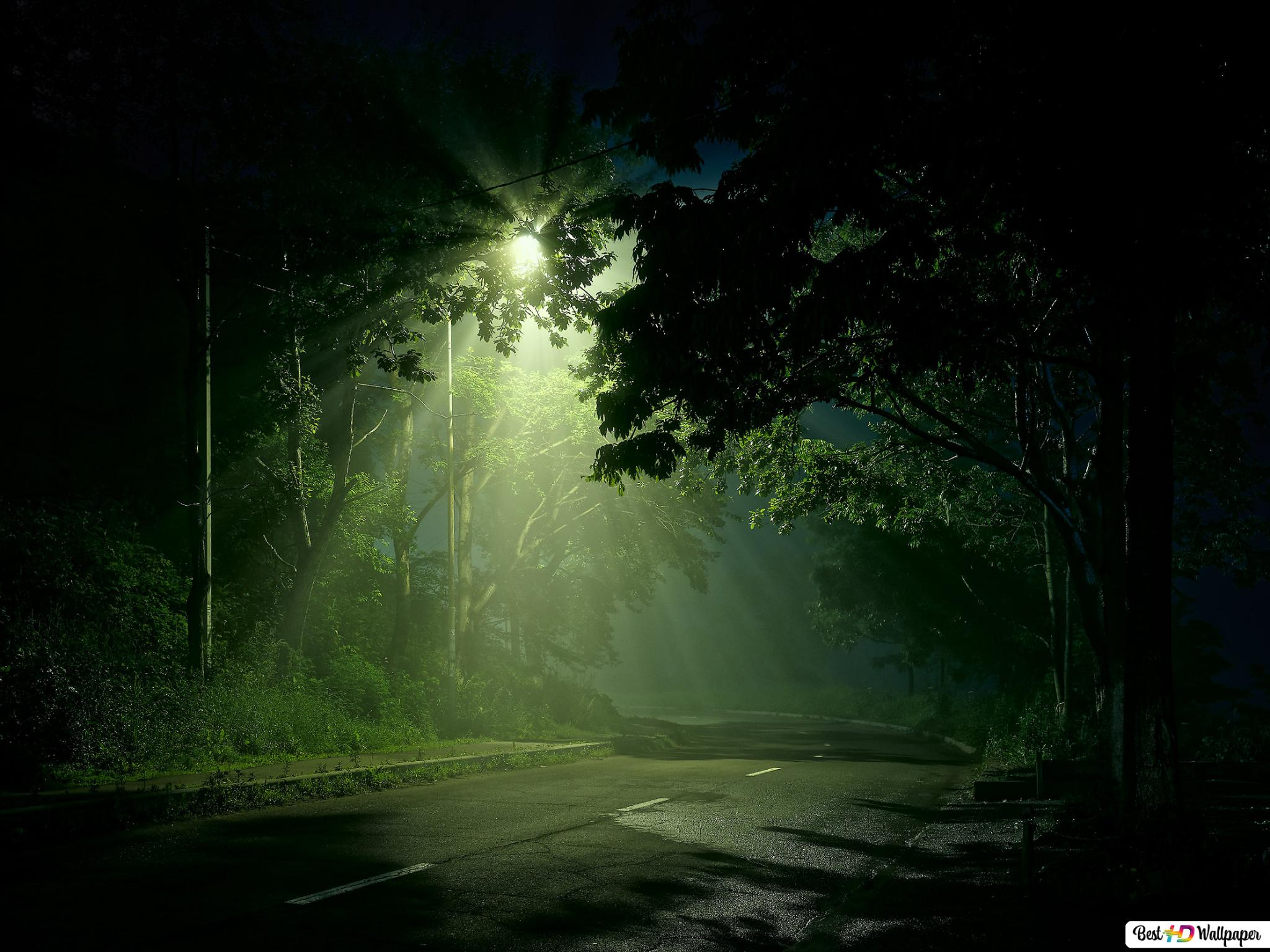 Dark Forest HD Wallpaper | Achtergrond | 1920x1080 | ID:685051 ... | 1536x2048