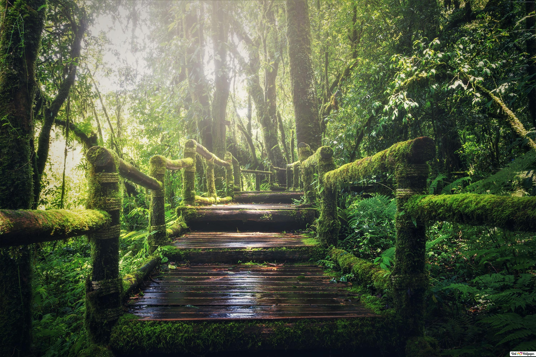 Unverwustlicher Wald Hd Hintergrundbilder Herunterladen