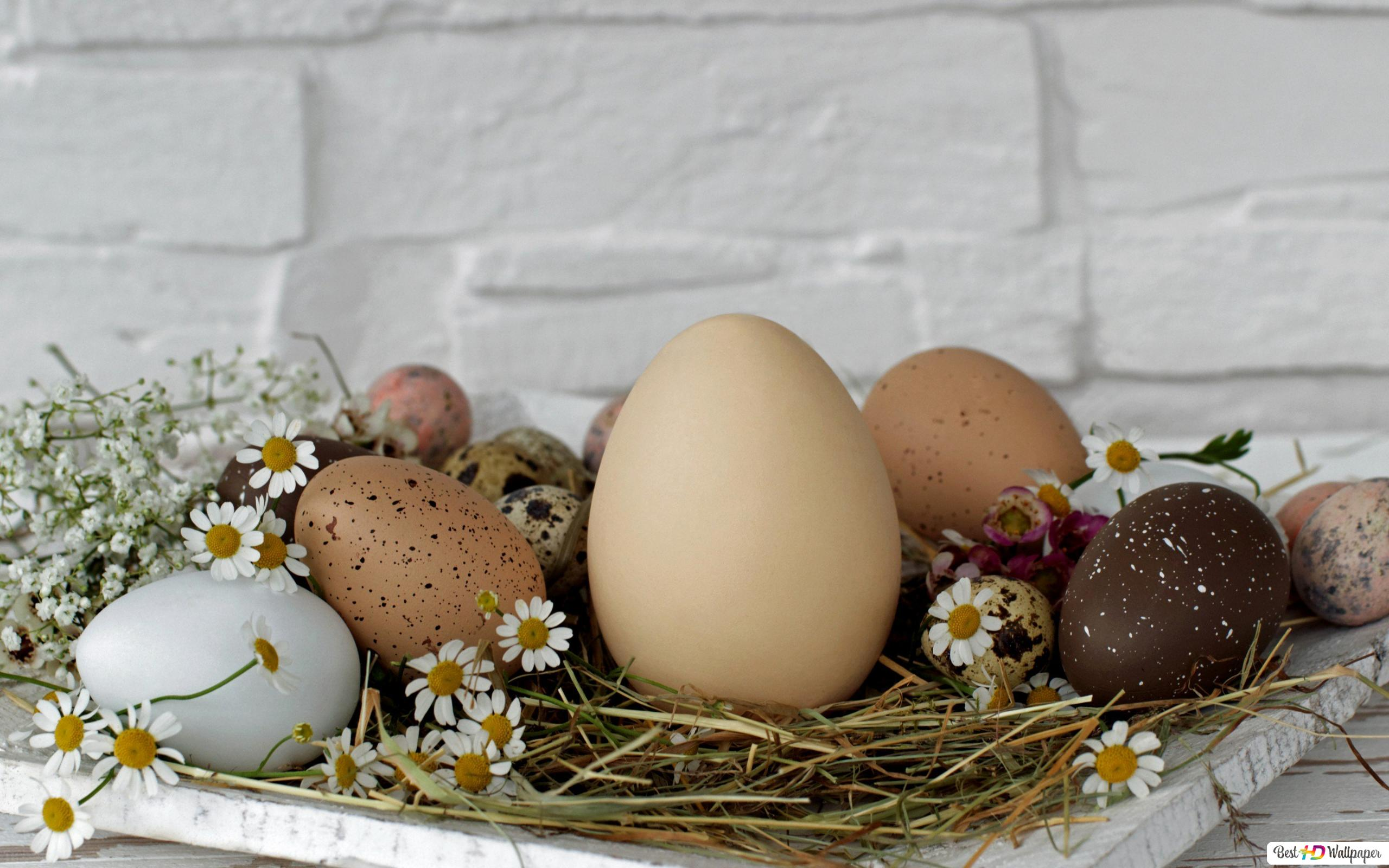 Sfondi desktop uova di pasqua