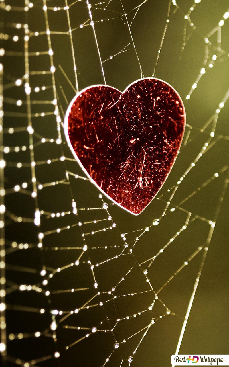 Valentine S Day Heart Stuck In Spider S Web Hd Wallpaper Download