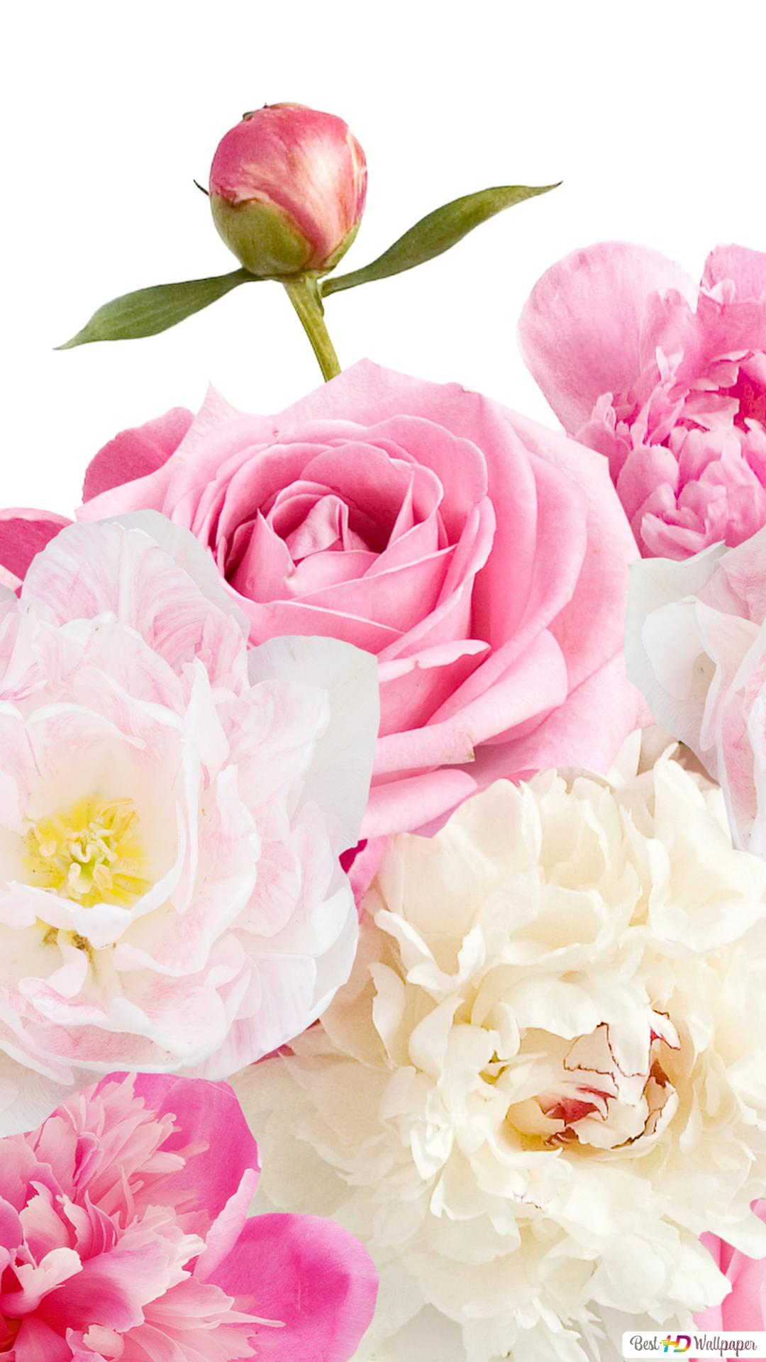 Valentines Day Lovely Pink And White Flowers Hd Wallpaper Download