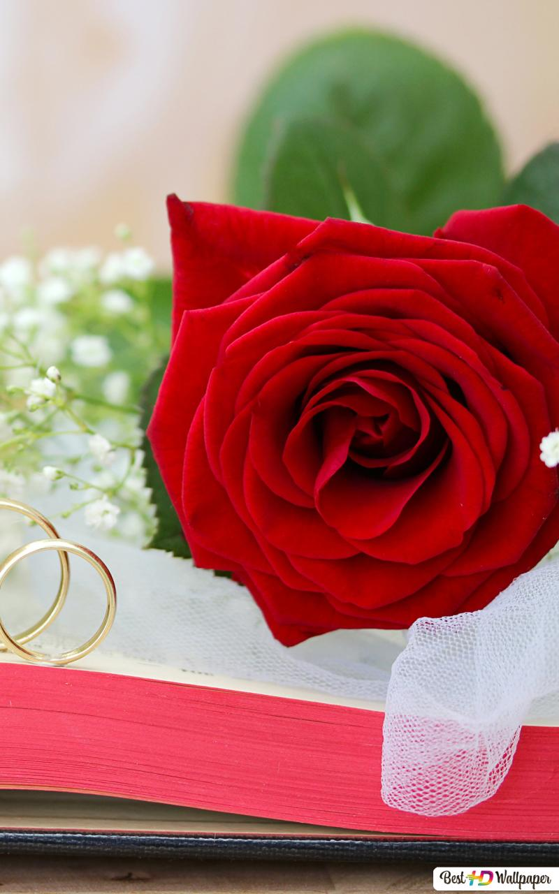 Valentines Day Lovely Red Rose On The Book Hd Wallpaper Download