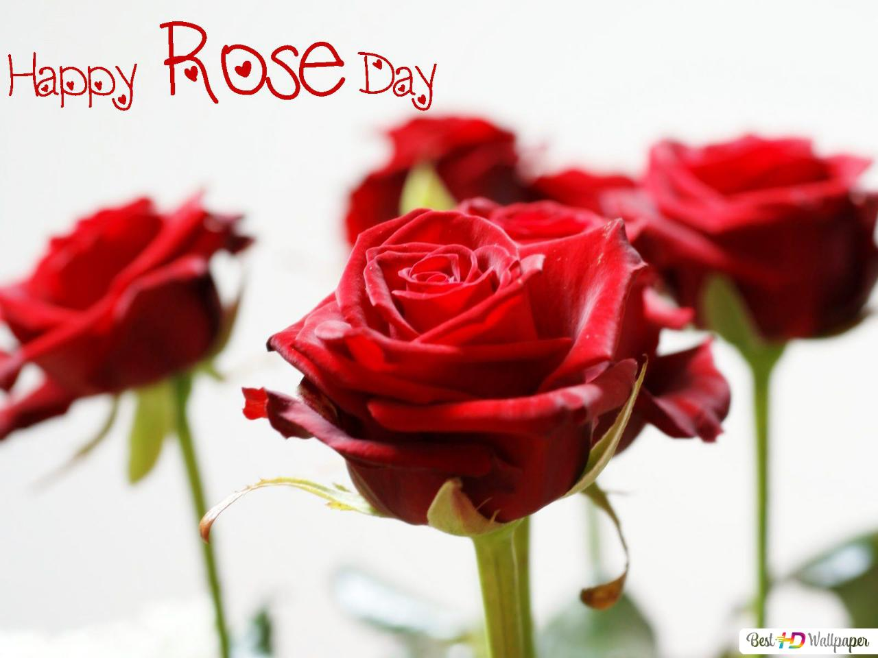 Valentines Day Red Roses Hd Wallpaper Download