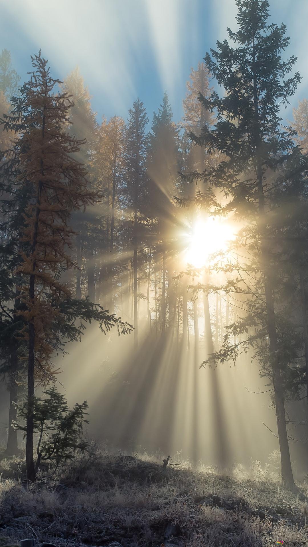 Wald Sunbeam Hd Hintergrundbilder Herunterladen