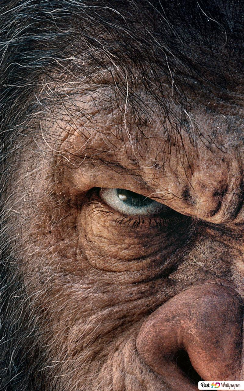 War Of The Planet Of The Apes Download Tripcrack S Blog