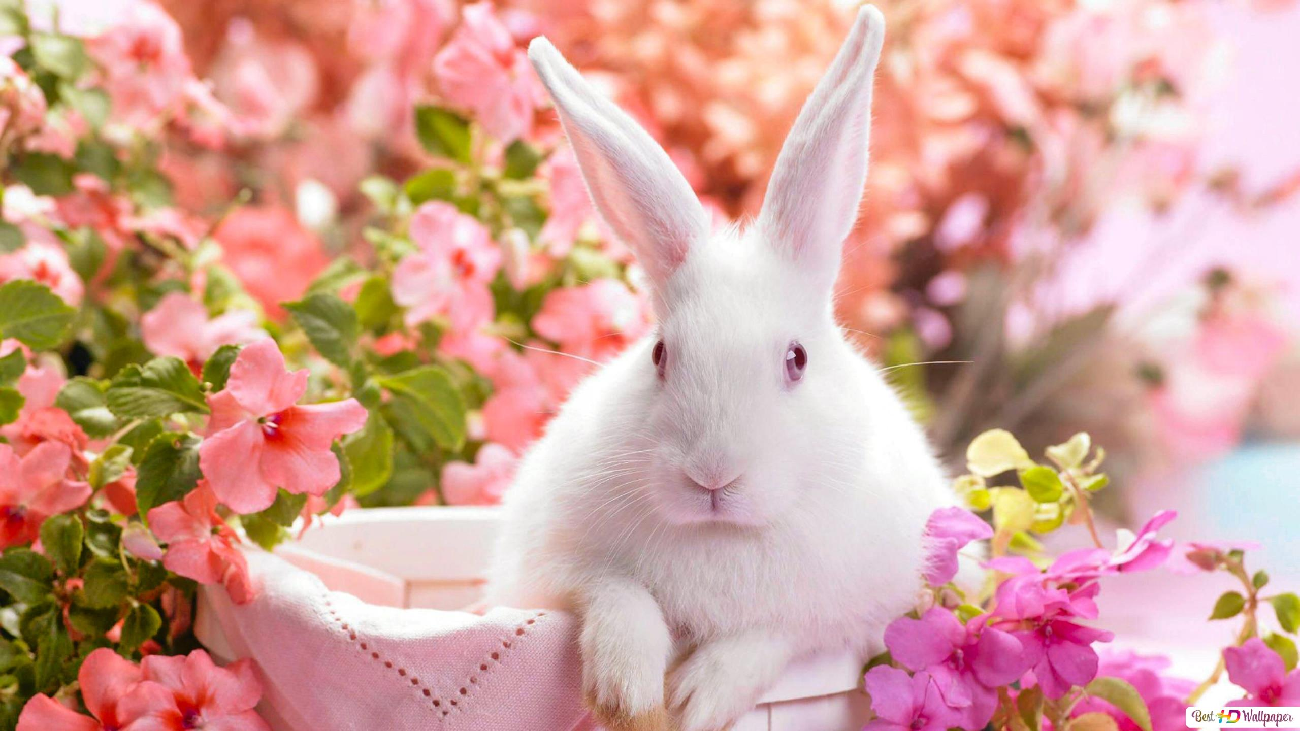 White Bunny Surrounded By Pink And Purple Flowers Hd Wallpaper