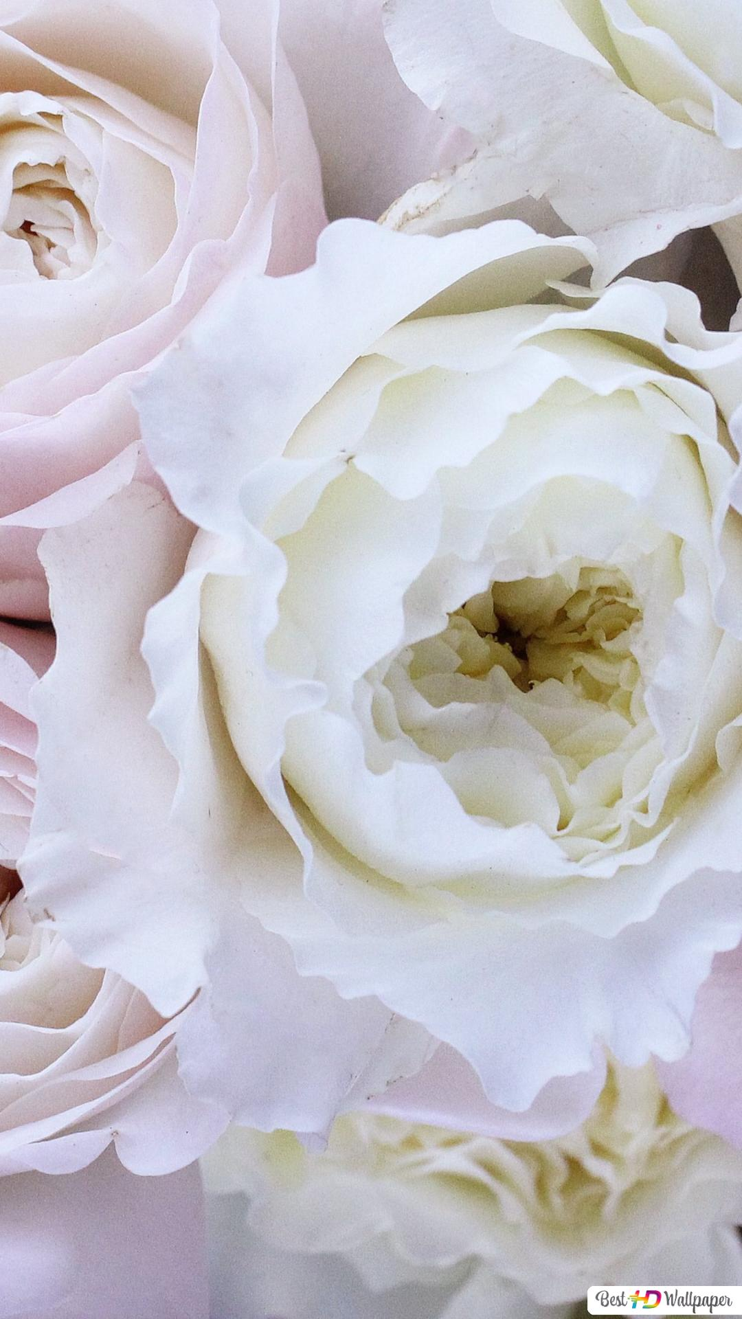 Beautiful white rose wallpapers wallpaper cave.