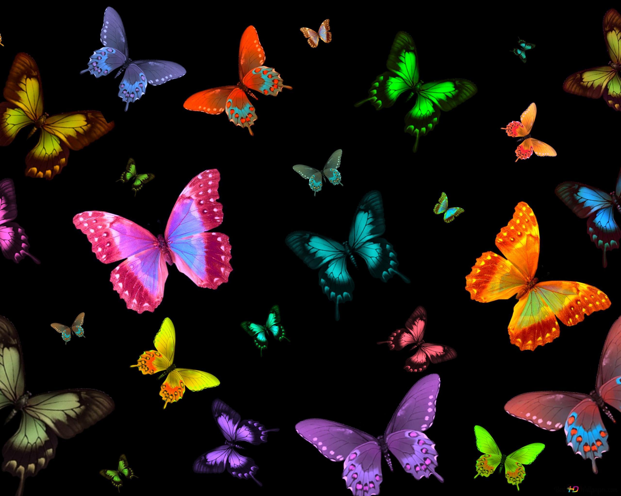 许多彩蝶高清壁纸下载