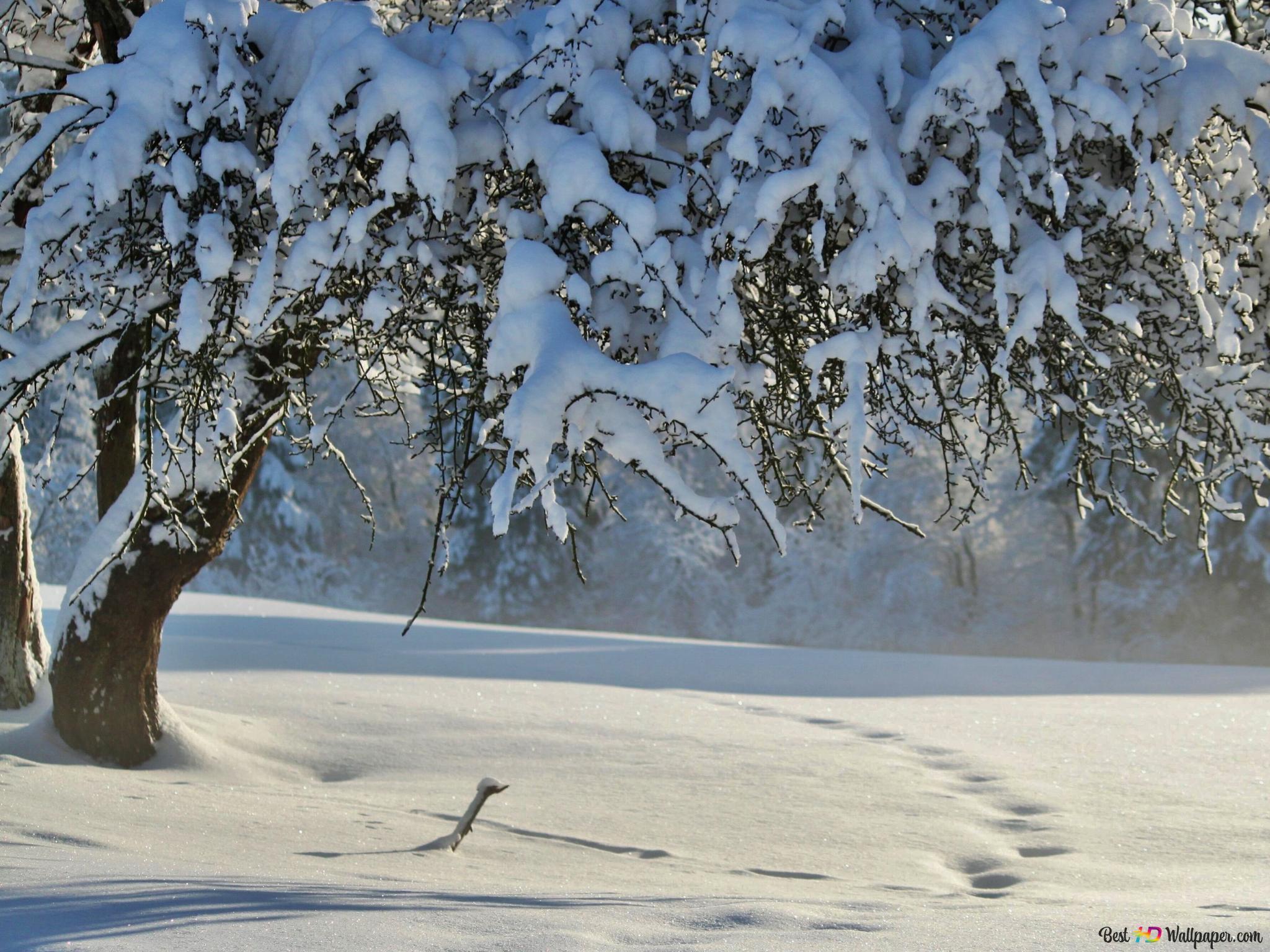 雪に覆われた冬の木 Hd壁紙のダウンロード