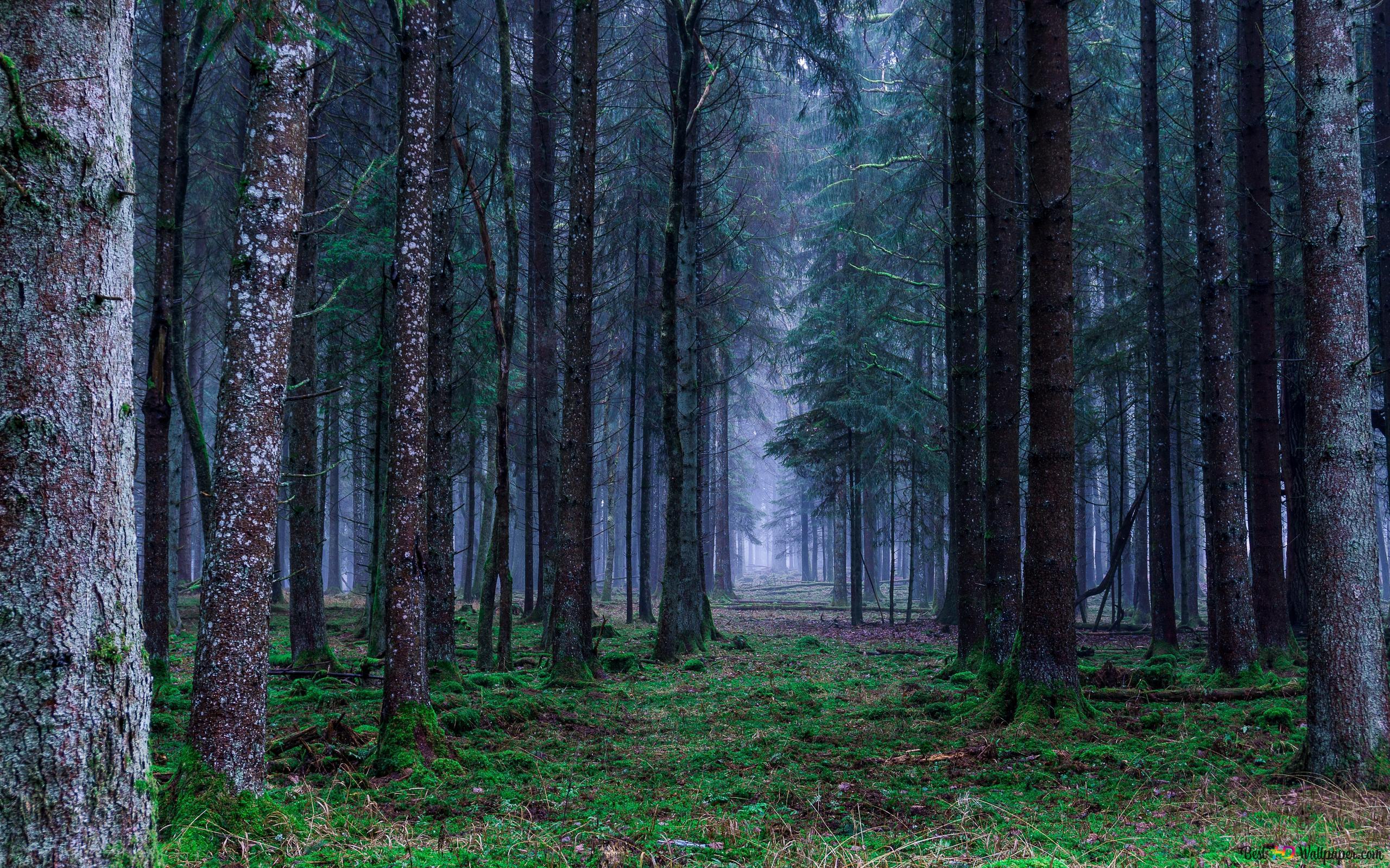 雨の森 Hd壁紙のダウンロード