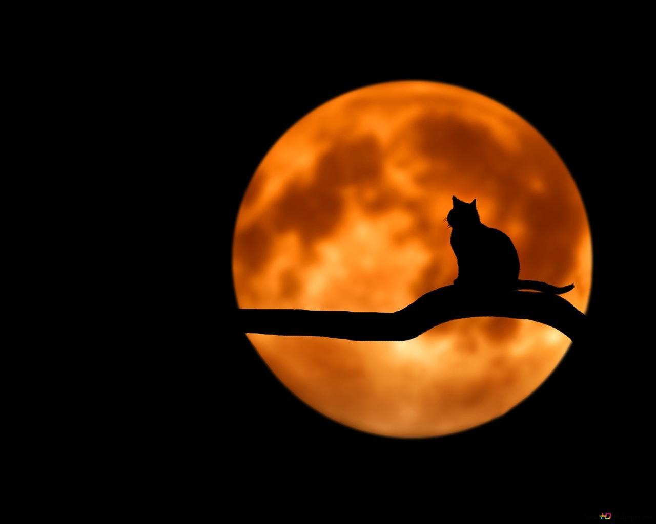 月の猫のシルエット Hd壁紙のダウンロード