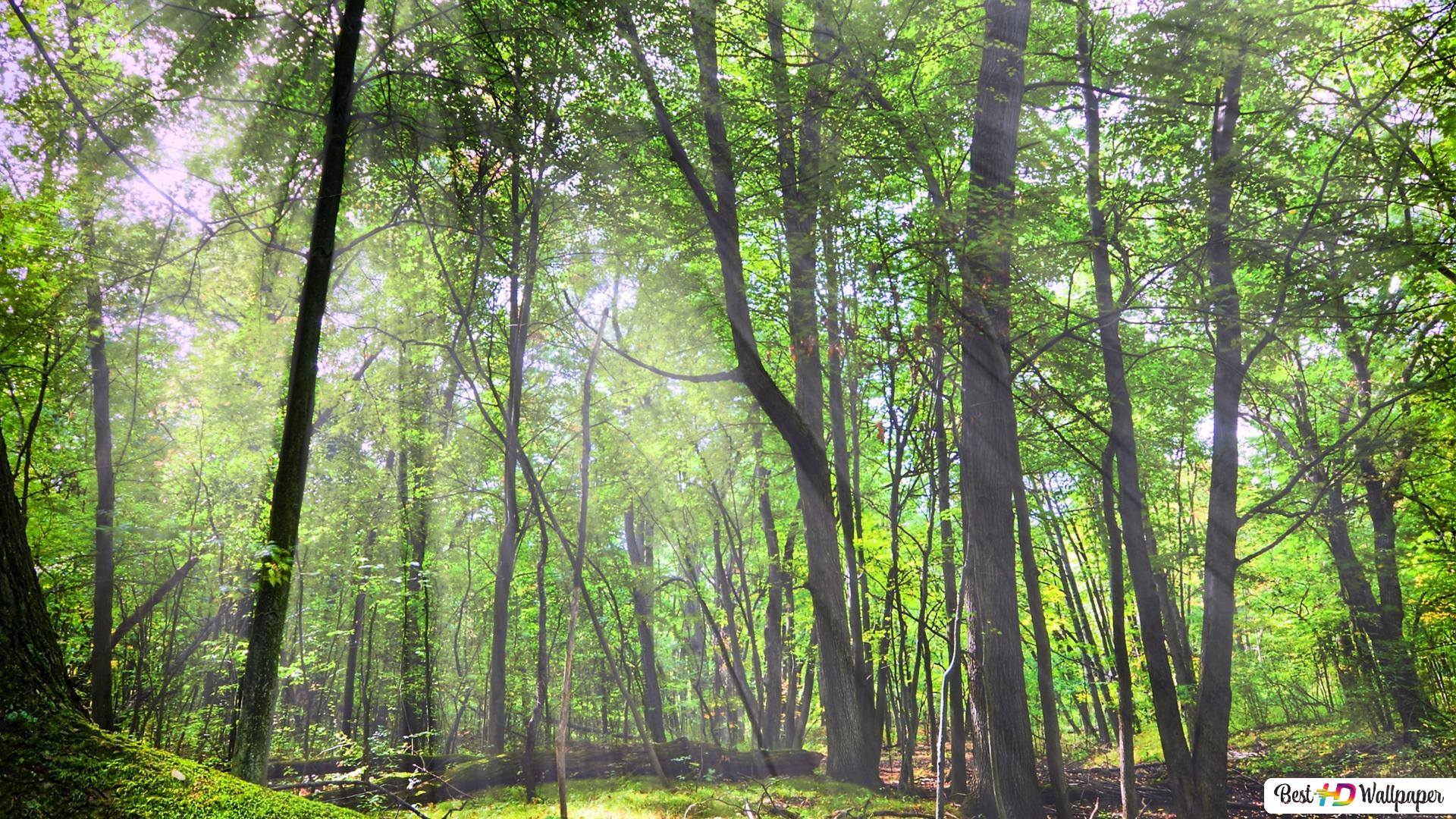 lo rewilding trees forests - 1200×675