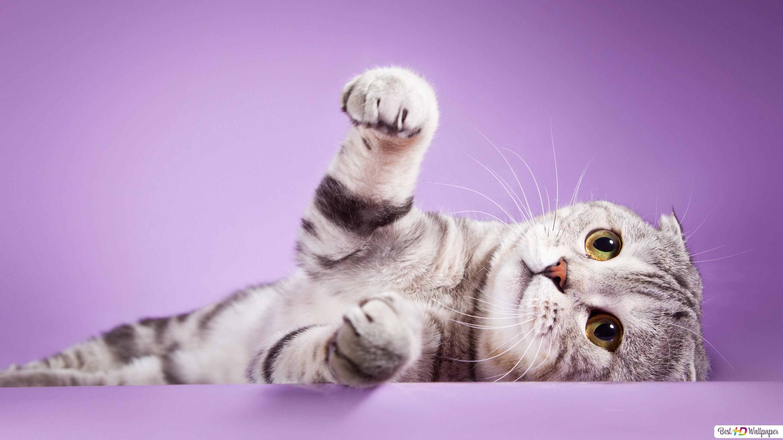 Kočička hd zdarma